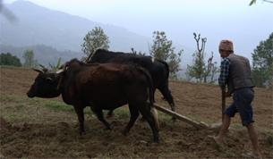 Ploughing in Astam